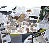 Fossils for Children - NEW HUGE 40pc Fossil COLLECTION - GENUINE Fossil Dinosaur bone, Trilobite, Ammonites. Woolly Mammoth and more - Set 3 of 5by Dinosaurs and Fossils...