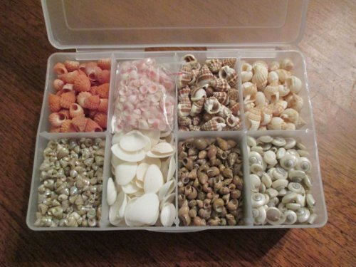 Tiny Seashell Variety Pack--Tiny Seashell Craft Assortment for Making Earrings, Jewelry, Sailors Valentines, Cache Pot, Frames, Mirrors, Boxes, and Many Other Crafts by Best Craft USA and MyWeddingShells.com. Organizer Box with Thousands of Tiny, Natu...