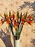 Elefan Artificial Elegant Bird of Paradise - Tropical Flower Bouquet Latex Silk Flower Bouquets 6pcs (orange (lot of 6pcs))
