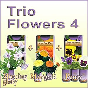 Grow Your Own Flowers (All-In-One Trio Pack: Morning Glory+ Pansy + Marigold)