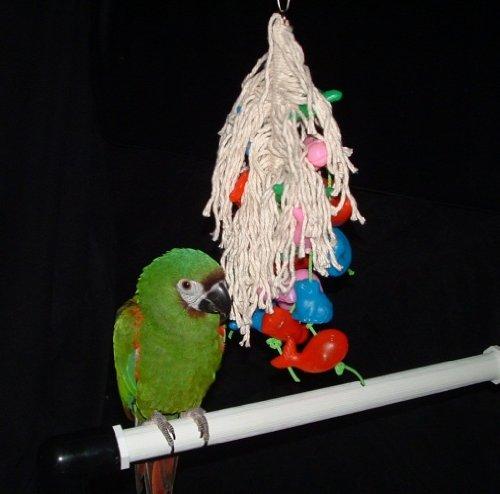 Cheap Sea World Parrot Toy for African Grey / Amazon Parrots (Junior) (B003RAKMMG)