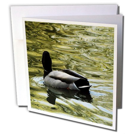Krista Funk Creations Migratory Birds - Mallard Duck Swims Away - 1 Greeting Card with envelope (gc_18562_5)