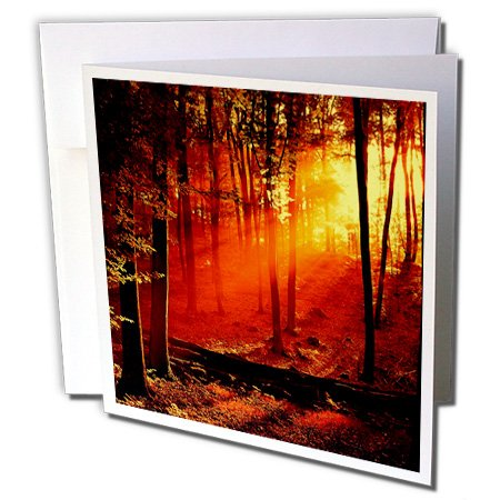 Florene Surrealism - Red n Yellow Sunlite Thru Fantasy Forest - 1 Greeting Card with envelope