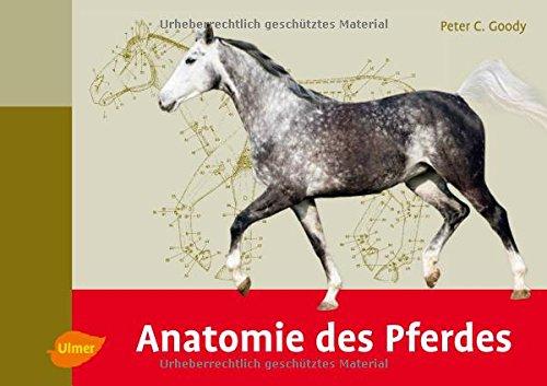 anatomie-des-pferdes