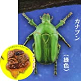 カプセルQミュージアム 樹液に集まる昆虫 真夏の夜の宴 [6.カナブン(緑色)&ヨツボシケシキスイ](単品)