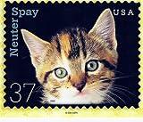 POSTCARD - NEUTER SPAY CATS
