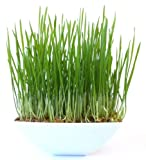 Rocket Cats Cat Grass Garden Kit White