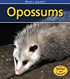 img - for Opossums (What's Awake?) book / textbook / text book