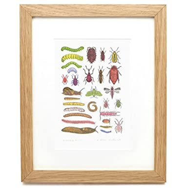 Garden Pests by John Dilnot (Framed Print)