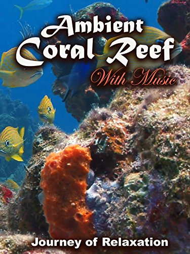 Ambient Coral Reef