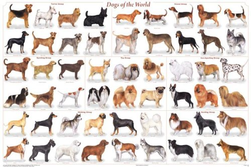 dog breeds chart. dog breeds of world poster.