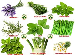 Only for Organic ! Combo of Nine herbs ! Mint, Rosemary, Lavender, Chives, Lemon Balm, Asparagus, Fennel Florence, German Chamomile, Sweet Marjoram ! 30 Seeds Each !