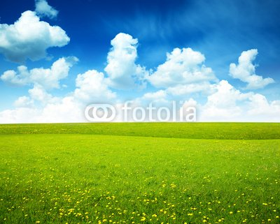 Wallmonkeys Peel and Stick Wall Decals - Field of Spring Flowers and Perfect Sky - 24