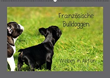 Französische Bulldoggen (Wandkalender 2013 DIN A3 quer): Welpen in Aktion (Monatskalender, 14 Seiten)