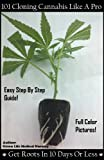 101 Guide to Cloning Cannabis Like A Pro