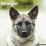 Norwegian Elkhound Calendar - Dog Breed Calendars 2017 - Dog Calendar - Calendars 2016 - 2017 wall calendars - 16 Month Wall Calendar by Avonside