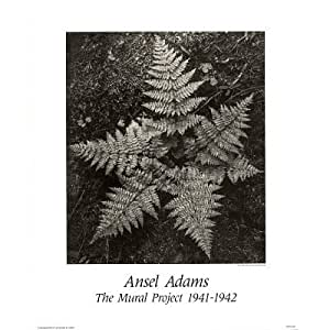 Ansel adams the mural project 1941 to 1942 fern print for Ansel adams mural project posters
