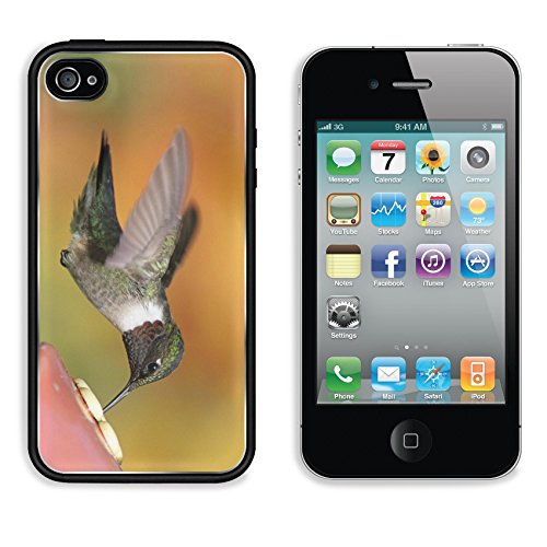 MSD Premium Apple iPhone 4 iPhone 4S Aluminum Backplate Bumper Snap Case IMAGE ID: 4886238 Ruby throated Hummingbird archilochus colubris at a feeder with a colorful background