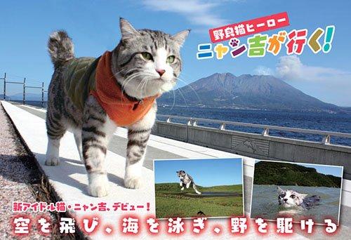 野良猫ヒーロー ニャン吉が行く!: かぎしっぽのアイドル猫「ニャン吉」感動の写真集