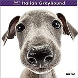 イタリアン・グレイハウンド 2017年 カレンダー 壁掛け