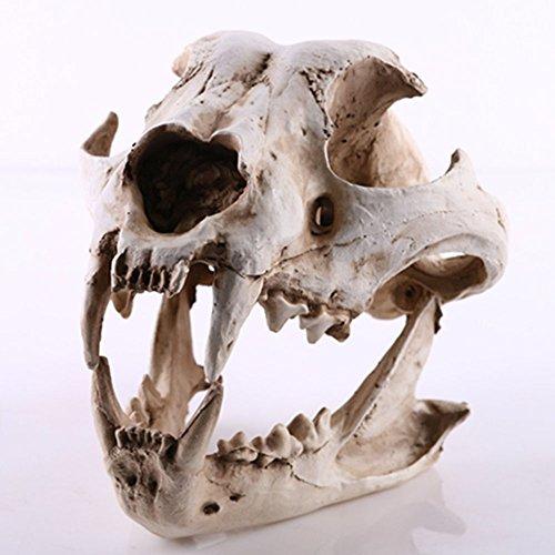 YX-Ornamento decorativo a forma di teschio in resina a forma di teschio, decorazione: lupo, Hyena, Resina, Dingo skull