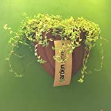 The Garden Store Wall Planter - B00WO919NM