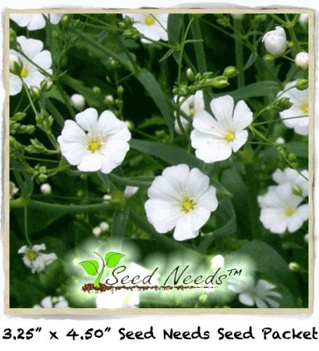 500 Baby's Breath Seeds By Seed Needs