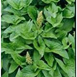 Herb Seeds - Lincolnshire Spinach - 1000 Seeds
