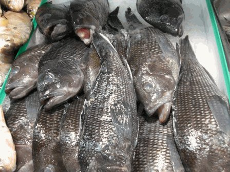 Fresh Virginia Beach Black Sea Bass 4 lb.