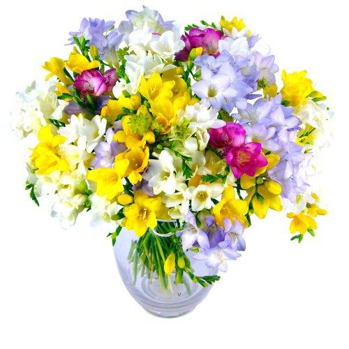 clare-florist-freesia-fragrance-fresh-flower-bouquet-colourful-mixed-freesia