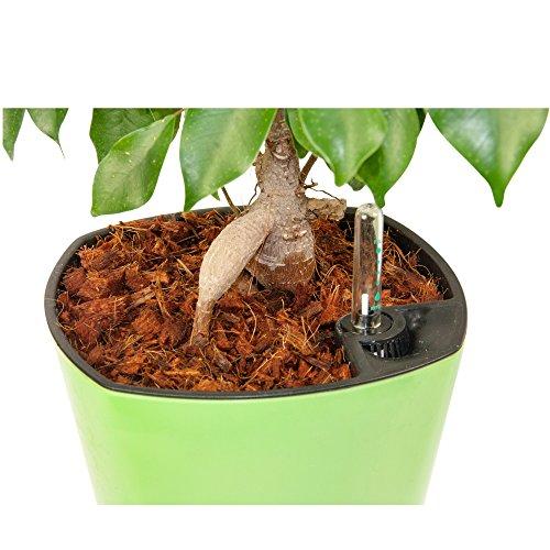 fiber-mulch-5-quarts-organic-potting-mulch-hydrating-bag-attractive-plants-cover-house-and-patio-pot