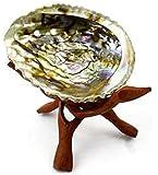 """Abalone Shell & 6"""" Wooden Tripod"""