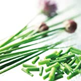 Suttons Seeds 150140 Chives Seed