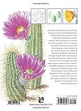 The Kew Book of Botanical Illustration