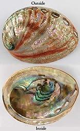 AzureGreen Red Abalone Shell Incense Burner Polished