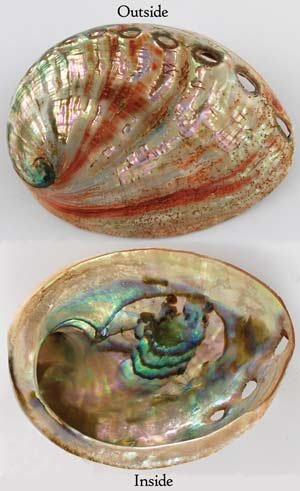 AzureGreen Red Abalone Shell Incense Burner Polished