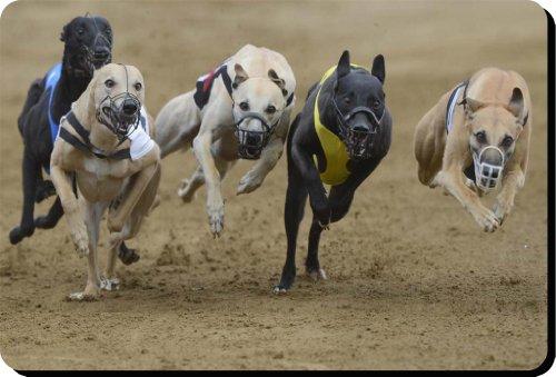 greyhound-dog-tappetino-per-mouse-pad-unico-regalo-per-tutti-gli-amanti-141