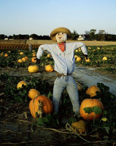 Scarecrow Photograph