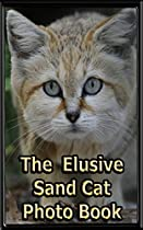 The Elusive Sand Cat: A Quite Small, Quite Fierce, & Secretive Desert Cat