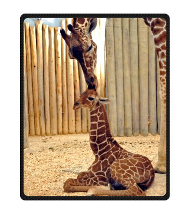 Animal Throw - Baby Giraffe