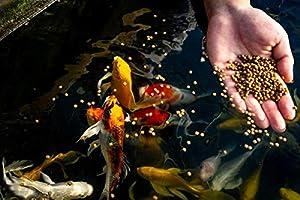 Blue Ridge Fish Food Pellets [50lb] Koi and Goldfish Growth Formula, Mini Floating Pellet, Balanced Diet (Tamaño: 50LB)