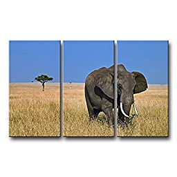 Canval prit painting 3 Panel Wall Art Elephant Walking In Grass s On Canvas The Picture Animal Pictures Oil Decor