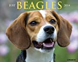 Just Beagles 2014 Wall Calendar
