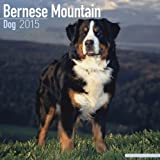 Wirestitched Bernese Mountain Dog 2015 (Square)