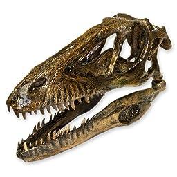 Deinonychus (Actual Size) Skull (Teaching Quality Recreation)