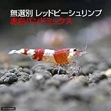 (エビ)無選別 レッドビーシュリンプ 赤白バンドミックス(5匹) 本州・四国限定[生体]