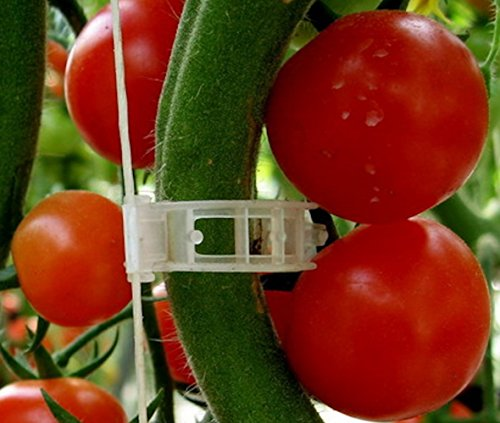 Plant Clips Support Tomatoes, Peppers, Vine Plants & Flowers to Grow Upright: 100 Plant Clips (Pepper Clip compare prices)