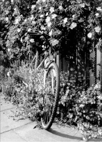 Greating Karte Blume Fahrrad, Jati Kennington Gartenbank, London, United Kingdom