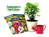 Exotic Green Environment Day Special Syngonium hybrid