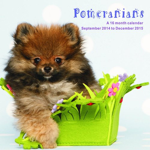 Pomeranians Calendar - 2015 Wall calendars - Dog Calendars - Monthly Wall Calendar by Magnum